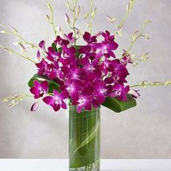 Awesome Orchids from Westbury Floral Designs in Westbury, NY