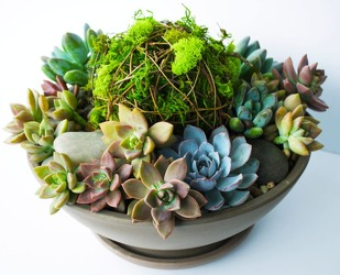 Super Succulents from Westbury Floral Designs in Westbury, NY