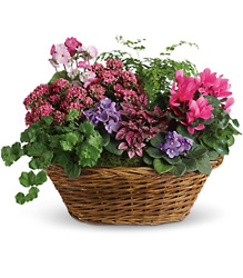 Simply Chic Mixed Plant Basket from Westbury Floral Designs in Westbury, NY
