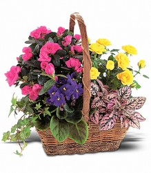 Blooming Garden Basket from Westbury Floral Designs in Westbury, NY