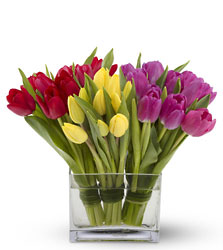 Tulips Together from Westbury Floral Designs in Westbury, NY