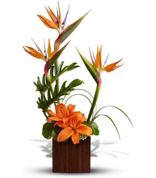 Bamboo Paradise from Westbury Floral Designs in Westbury, NY